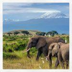 Amboseli Natiional Park- Natural World Kenya Safaris